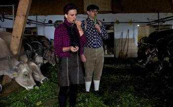 Kühe & Meisen kosten Gras